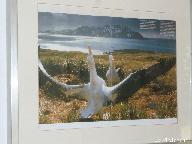 2 Persoons Tafel : Ferienhaus albatros auf vlieland